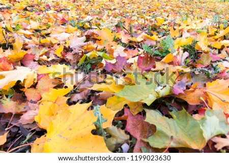 carpet of colorful autumn leaves #1199023630