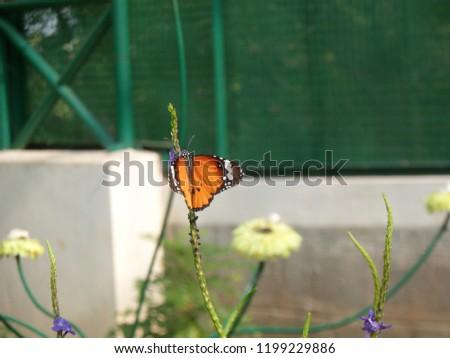 monarch butterfly on flower #1199229886