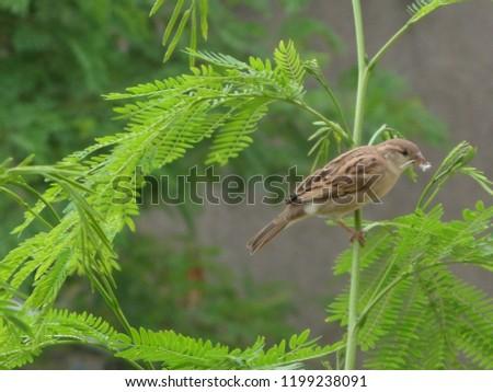 sparrow on tree #1199238091