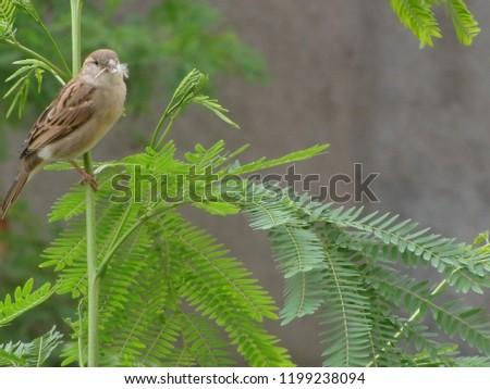 sparrow on tree #1199238094