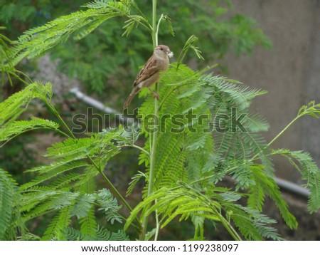 sparrow on tree #1199238097
