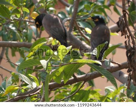 myna bird on tree #1199243644
