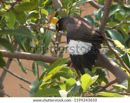 myna bird on tree #1199243650