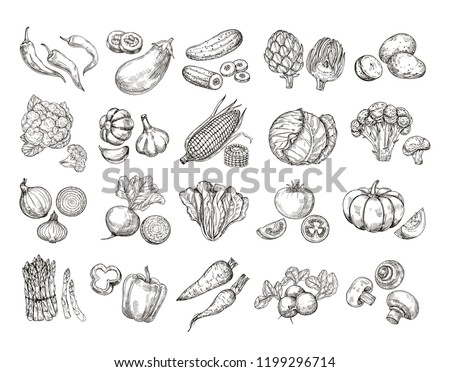 Sketch vegetables. Vintage hand drawn garden vegetable collection. Carrots broccoli potato salad mushroom farming vector set. Salad and carrot, sketch mushroom illustration Royalty-Free Stock Photo #1199296714