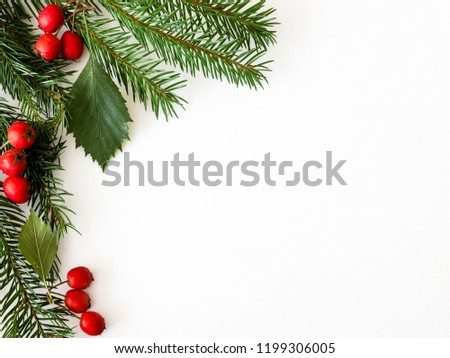 Background for Christmas and new year cards with a branch of spruce and red berries. Isolated. Copy space. #1199306005