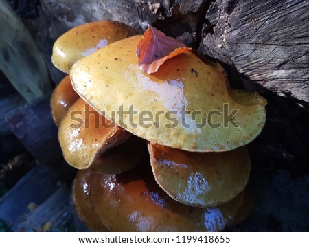 mushroom family standing in the forest at a tree #1199418655