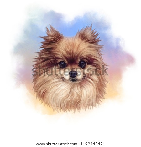 Pomeranian. Illustration of a handsome puppy on watercolor background. Cute Spitz. Small Toy Dog Breeds. Hand drawn Portrait. Watercolor Animal collection: Dogs. Good for print T-shirt, banner, card