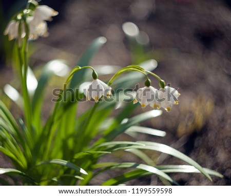 Early spring flowers on a blurry background with leaves and bokeh #1199559598