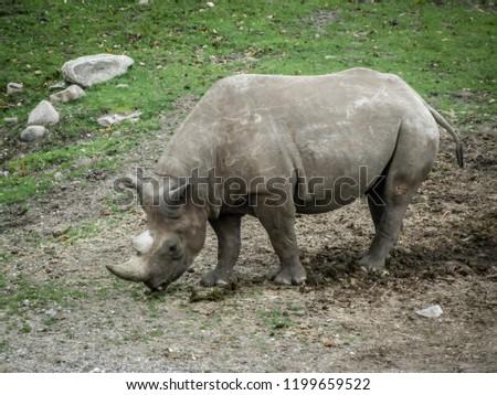 Rhinoceros in Zoo #1199659522