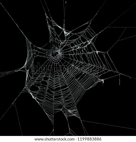 Real frost covered spider web isolated on black Royalty-Free Stock Photo #1199883886
