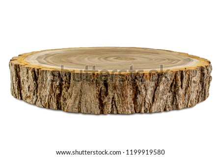 Side view of acacia tree cross section isolated on white background #1199919580