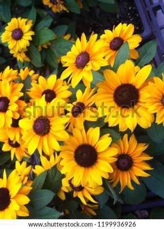 Beautiful yellow flowers #1199936926