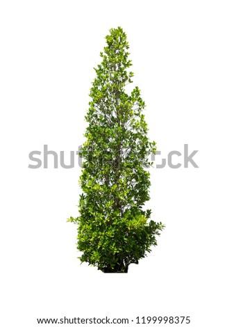 Isolated tree on white background #1199998375