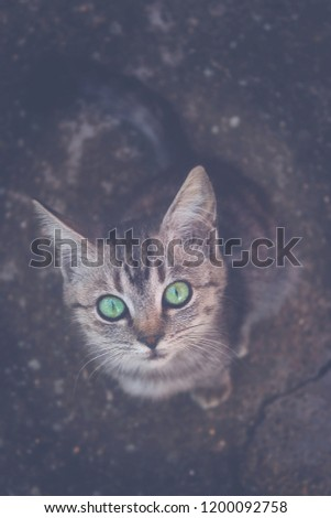 Cat with green eyes. #1200092758
