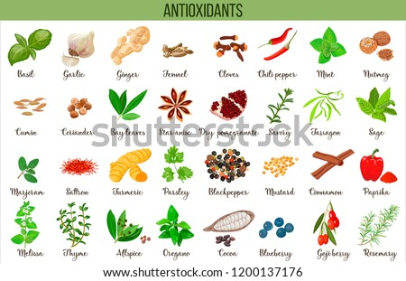 Antioxidant food, herbs and spices. healthy lifestyle. Super food anthocyanins, vector illustration #1200137176