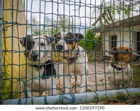 three little puppies behind bars #1200197290