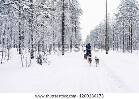 People in Husky dog sled in Finland in Lapland in winter. #1200236173