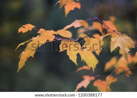 yellow and red autumn leaves on a branch #1200388177