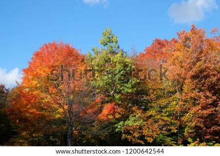 New England in the fall foliage season. Autumn gold and sugar maple trees #1200642544