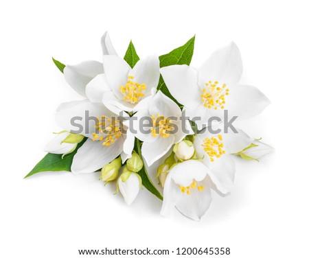 white jasmine flowers closeup. Isolated on white background #1200645358