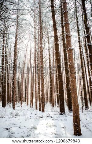 Winter Trees 18 #1200679843