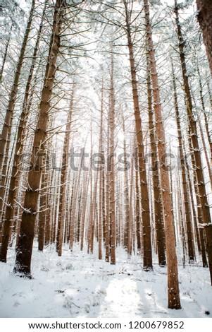 Winter Trees 21 #1200679852