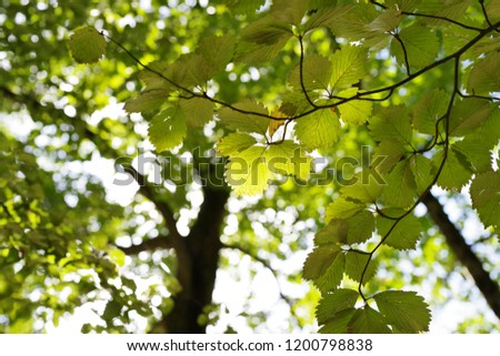 Light leaking from between leaves of trees #1200798838