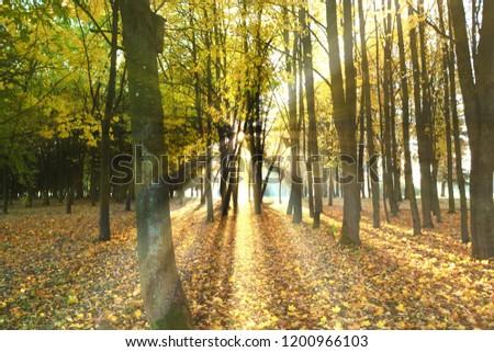autumn sun rays #1200966103