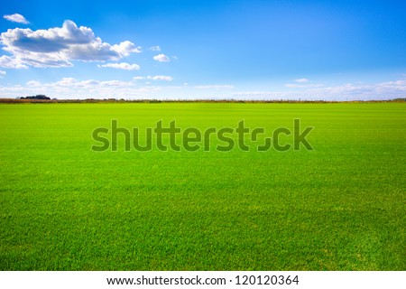 Background image of lush grass field under blue sky #120120364