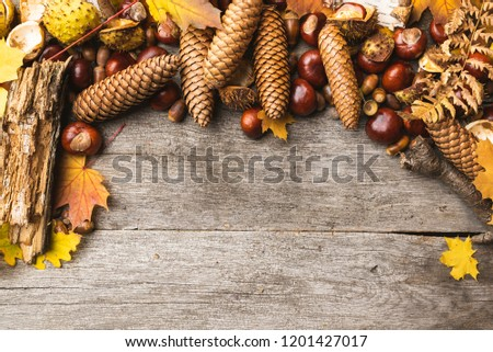 Autumn arrangement, concept still life with chestnuts, cones, acorns, leaves, bark on wooden background. Seasonal frame from autumn harvest. Flat-lay visualization with copy space. Table top view. #1201427017