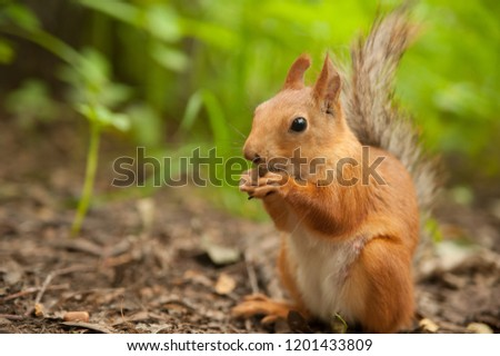 Squirrel in the forest #1201433809