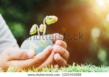 Hand holding clay globe model with seeding plant for save world in sunny day on green grass, Green World Environment ecology day, Life on earth concept, flare light and vintage tone #1201443088
