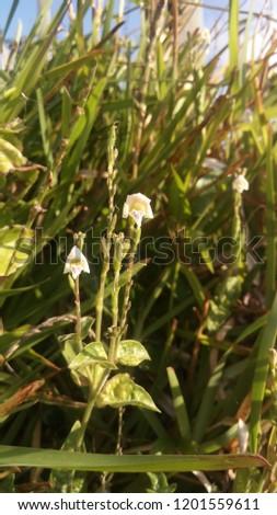 Grass flower in the bush #1201559611