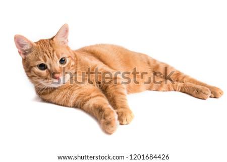 Cat lying on white background #1201684426
