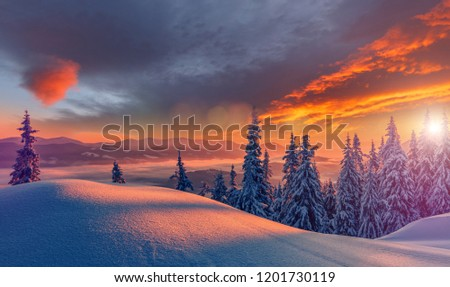 Wonderful picturesque Scene. Awesome Winter landscape with colorful sky. Incredible view of Snow-cowered trees, glowing sunlit, during sunset. Amazing wintry background. Fantastic Christmas Scene.