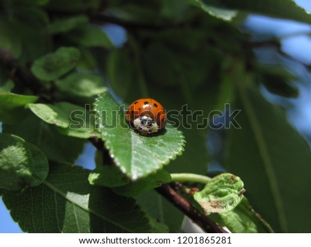 A harlequin lady bug sitting on a leaf. #1201865281