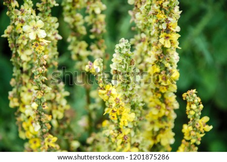 beautiful yellow flowers #1201875286
