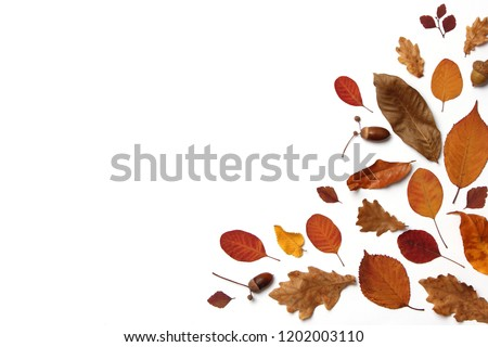 autumn composition of leaves on a white background top view. Place for text, minimalism, insta, flatlay #1202003110