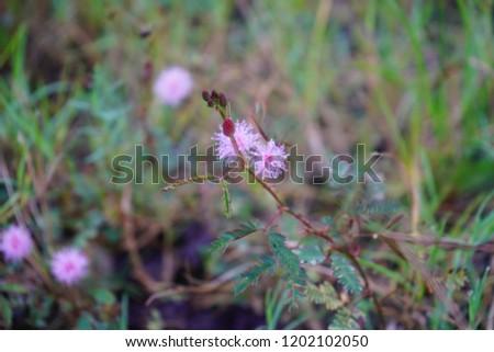 Flowers on Earth #1202102050