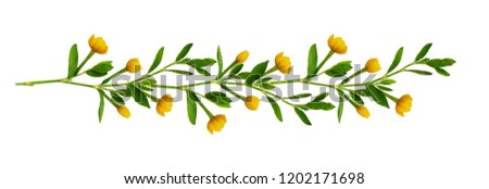 Line arrangement with fresh leaves and yellow flowers isolated on white #1202171698