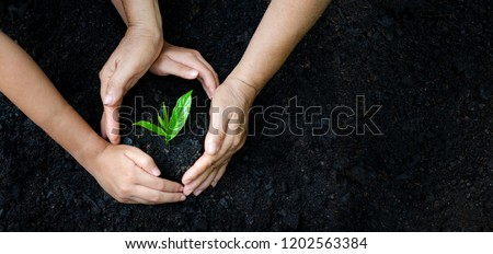 environment Earth Day In the hands of trees growing seedlings. Bokeh green Background Female hand holding tree on nature field grass Forest conservation concept #1202563384