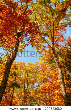 Beautiful autumn landscape with yellow trees,green, sun and blue sky #1202628580