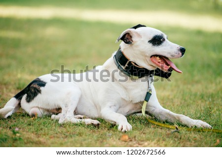 Dog - human`s true friend. Big adorable puppy with funny muzzle and kind eyes relaxing on green grass at field. Beautiful sweet happy breeding white dog outdoor portrait. Domestic smiling pet face #1202672566
