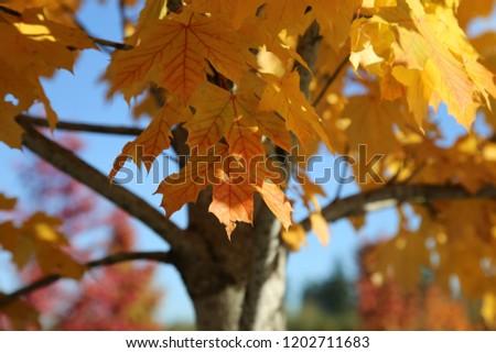 Yellow autumn leaves #1202711683