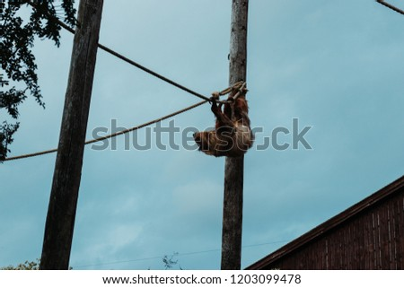 A sloth climbing in its zoo enclosure. #1203099478