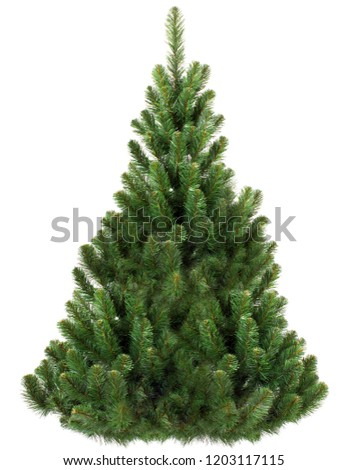 Green Pine, christmas tree isolated on white closeup #1203117115