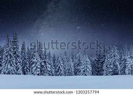 Dairy Star Trek in the winter woods. Dramatic and picturesque scene. In anticipation of the holiday. Carpathian Ukraine. #1203257794