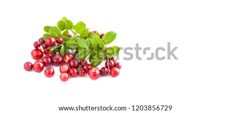 Ripe red cowberries isolated on white background. Fresh berries Vaccinium vitis-idaea with green leaves. Copy space. #1203856729