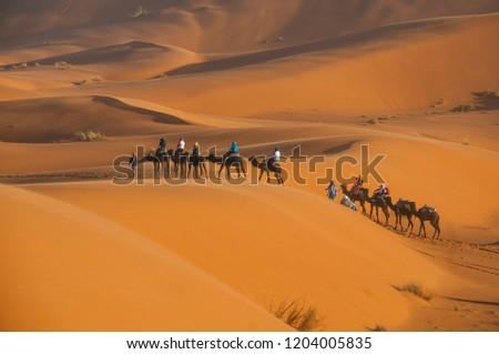 Tourists are riding camels through Sahara desert.  #1204005835
