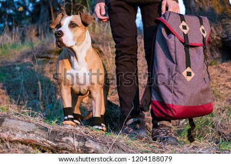 Hiker and dog in hiking shoes stand side by side in the forest. Dog in hiking boots and male person holding backpack pictured in evening sun